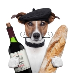 French dog